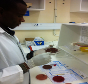 A laboratory scientist prepares samples for culture.
